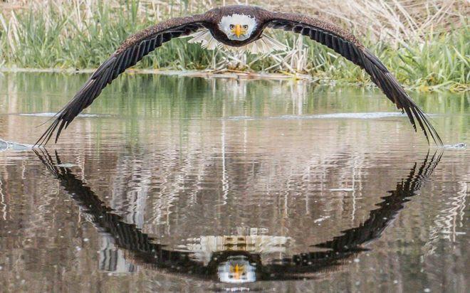 107135002_eagle