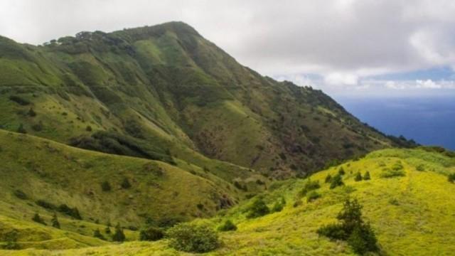 A Montanha Verde é um ecossistema criado pelo homem, onde espécies introduzidas e plantas nativas evoluíram juntas - Image Diane Selkirk