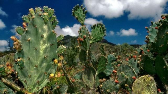 Os cactos acrescentam cor à paisagem árida da ilha - Getty Images
