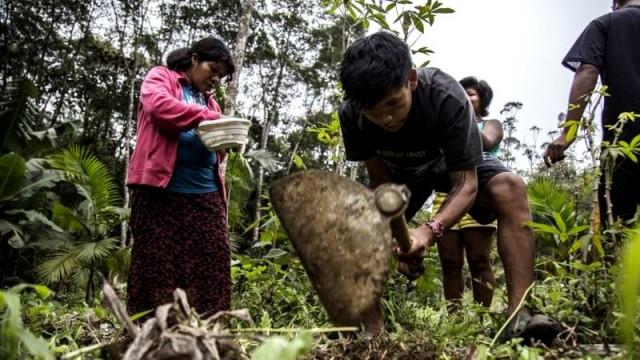 Mulheres são 40% dos agricultores guarani na TI Tenondé Porã (foto Pedro Biava)