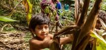 Menino em roça de milho consorciada com mandioca em aldeia da TI Tenondé Porã (foto Ormuzd Alves)