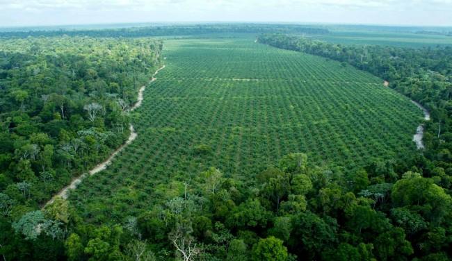 Imagem aérea da fazenda da empresa Agropalma, onde são preservados 64.000 hectares de mata nativa, incluindo árvores de até 50 metros, muito maiores que as palmeiras, como se vê na imagem AGROPALMA