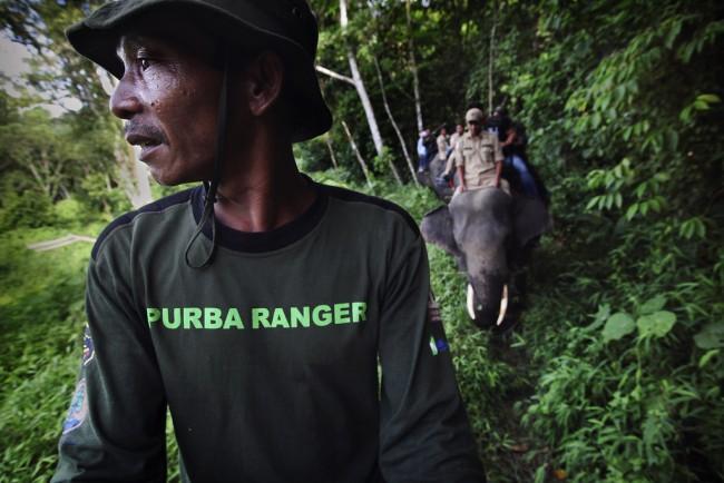 Andando 'de elefante', guardas-florestais fazem patrulha em parque da Indonésia. Muitos deles eram madeireiros ilegais, mas resolveram se dedicar à conservação após receberem treinamento e entenderem como a preservação da vida silvestre traz benefícios econômicos, sociais e ecológicos. Foto: DFID/Abbie Trayler-Smith/Panos Pictures