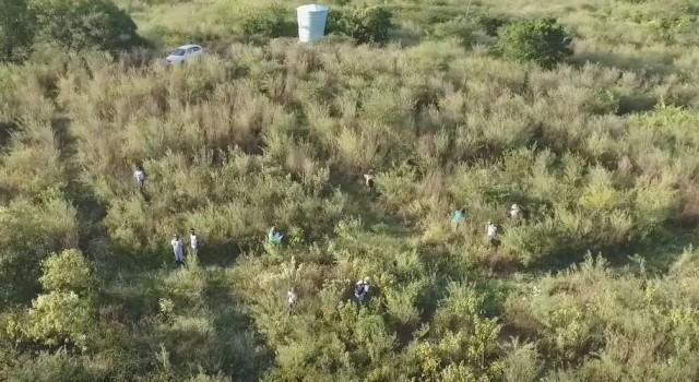 Trecho da área do experimento, na Floresta Nacional do Açu, cinco anos após o replantio. Foto: Gislene Ganade.