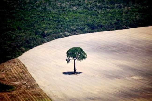 DesmatamentoAmazônia - Foto: Caetano Scannavino