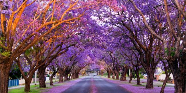 As-Árvores-Mais-Incríveis-Do-Mundo-10