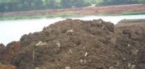 Material depositado nas margens da lagoa - lixo