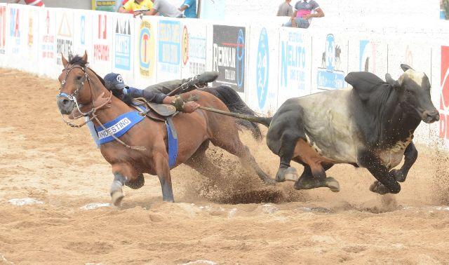 cavalo-de-vaquejada-11