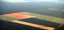 Desmatamento-na-Amazonia-4