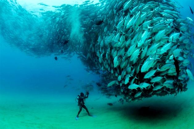Fish-Tornado-1