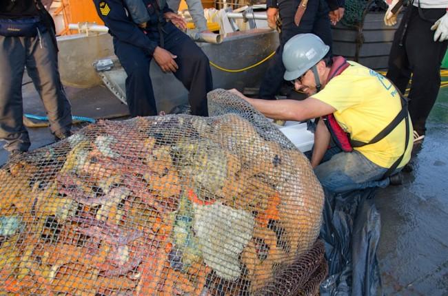 Rodrigo Leão Moura, da UFRJ, inspeciona uma rede de arrasto recheada de esponjas coloridas, coletadas na região central dos recifes. Foto: Fernando Moraes/JBRJ
