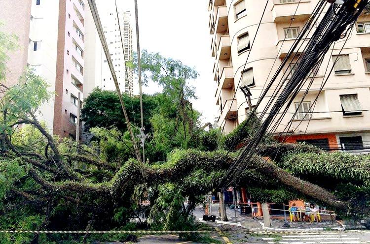 Um perigo constante a cada temporal: enchentes e quedas de árvores.