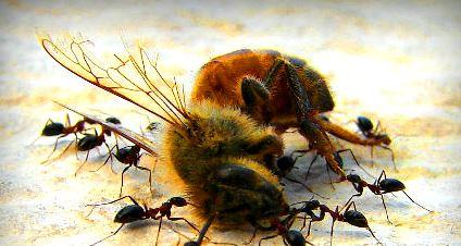 Morte de abelhas compromete ecossistema e produção de alimentos no mundo.