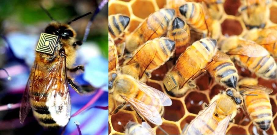 abelhas2b