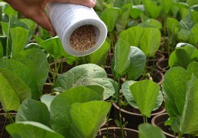 acaros-predadores-vermiculita
