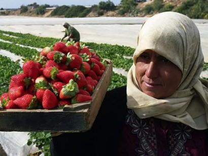 agricultura em gaza