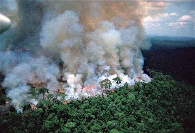 amazon-disaster
