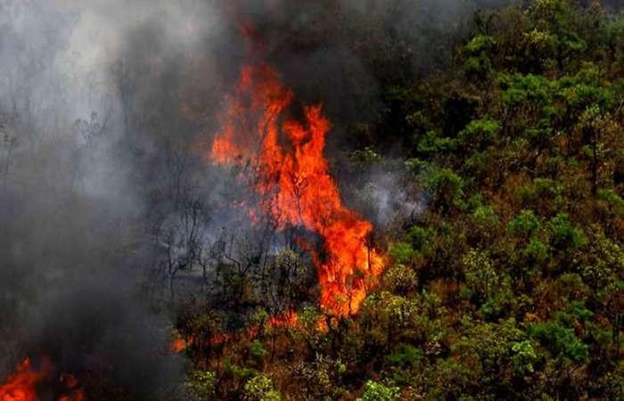 Queimadas na Amazônia 2019 (Foto: Agência Minas)