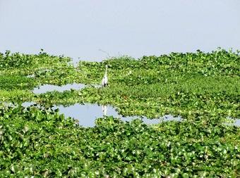 Várzea do rio Tietê no reservatório de Barra Bonita. Imagem: André Bonacin/Panoramio (em atendimento à norma legal 9.610/98)