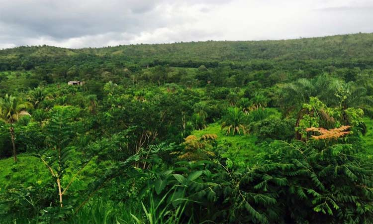 Área em Mato Grosso já está sendo preparada para receber os animais