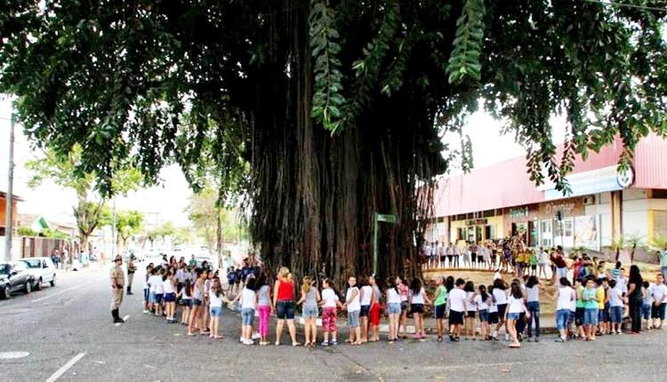 Abraço simbólico na Ficus elástica, árvore do Cariru tombada pelo patrimônio cultural de Ipatinga, marcou a comemoração do Dia da Árvore no ano de 2013.(foto JBReis)