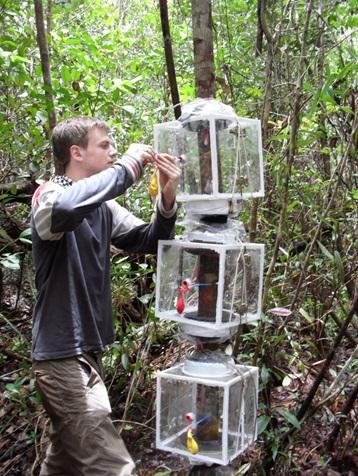 Pesquisadores da Universidade Aberta instalam câmaras em volta do tronco das árvores para medir as emissões de CH4