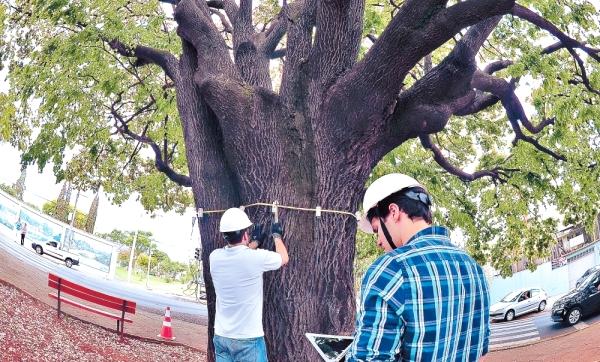 Avaliação da saúde das árvores.