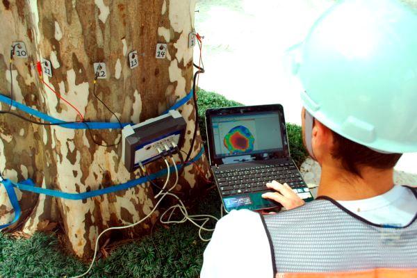 Profissionais fazem monitoramento do estado de saúde das árvores.