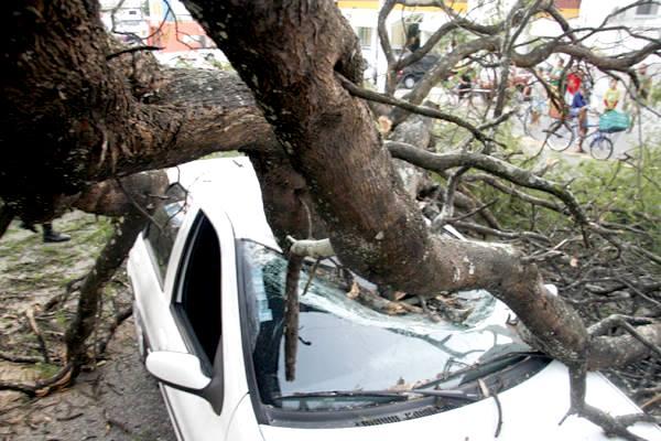 Em janeiro São Paulo teve  mais de mil árvores caídas durante temporal e um caso de morte devido queda em cima de carro.