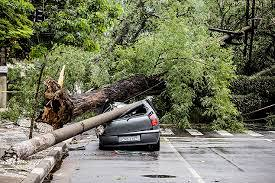 Sistema de energia elétrica e monitoramento de tráfego são os mais afetados com os acidentes com a queda de árvores.
