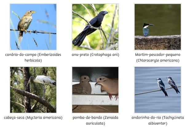 aves-sosma2
