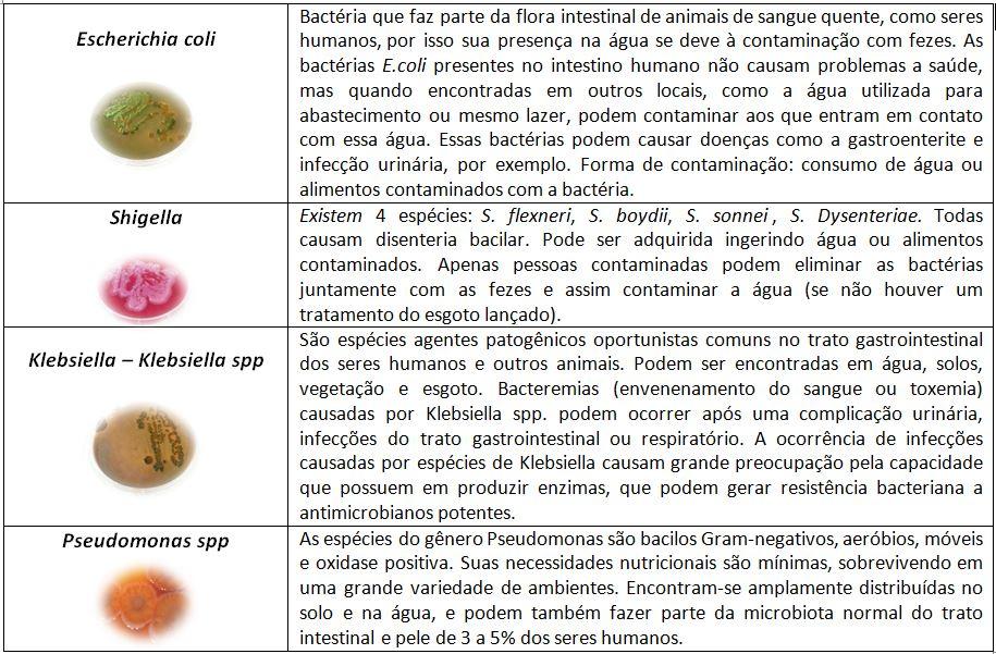 bacterias-tabela-rio-doce