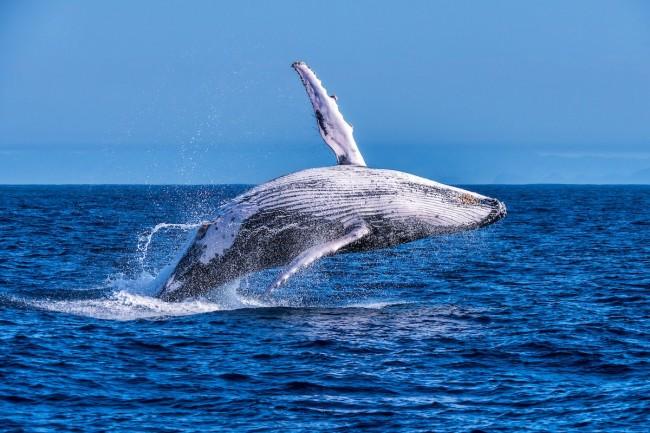 baleia_jubarte-itacare-ta_por_onde-1