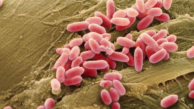 Sem oxigênio e em estado latente, as bactérias que compõem o bioconcreto podem permanecer vivas por séculos, dizem cientistas
