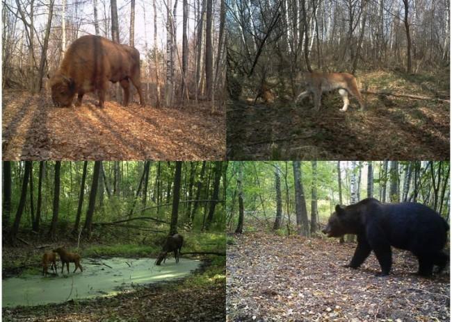 biodiversidade-em-chernobyl-2