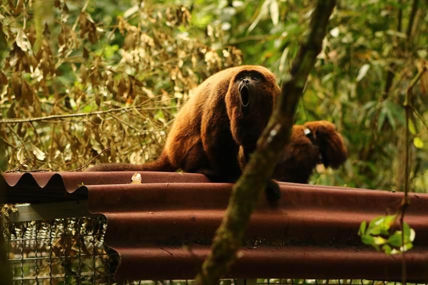 Crédito Luísa Genes/Fundação Grupo Boticário