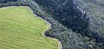 Cerrado brasileiro (Foto: Marizilda Cruppe/Greenpeace)
