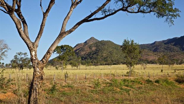 Em primeiro plano, árvore típica do Cerrado: ao fundo, uma pastagem toma o lugar da vegetação original | Foto: Divulgação