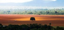 Alto Paraíso (GO) -  Área de cerrado desmatada para plantio no município de Alto Paraíso (Marcelo Camargo/Agência Brasil)