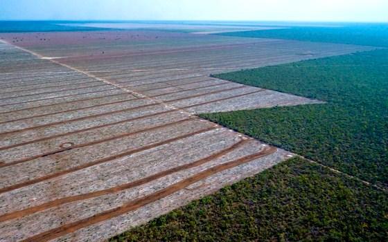 O Cerrado brasileiro (Foto: Jim Wickens/Ecostorm)