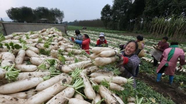 Diversas províncias usam a semeadura de nuvens para tentar proteger suas plantações — Foto: Getty Images via BBC