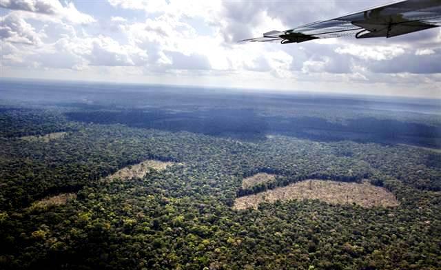 Clareiras na Amazônia