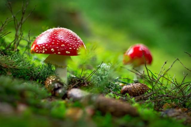 cogumelos-mágicos-washington-2