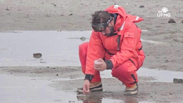 Coleta de amostras em solo antártico. (Créditos da imagem: Mycoanatar/TV UFMG).