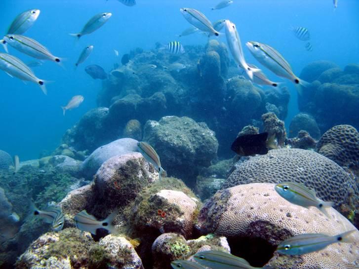 Imagens fundo do mar - Projeto Coral Vivo