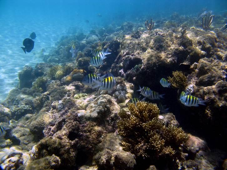 Imagens fundo do mar Projeto Coral Vivo.