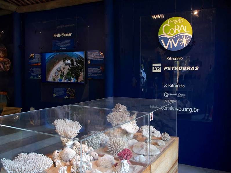 Esqueletos de colônias centenárias de corais .