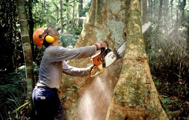 Regras do manejo florestal em terras públicas da Amazônia são estritas