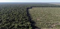 desmatamento-amazonia-aumenta