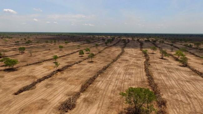 Desmatamento ilegal em área do cerrado. (imagem JD1)